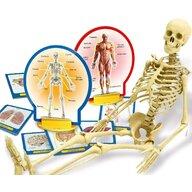 LISCIANI - Experimentele micului geniu - Corpul uman