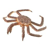Collecta - Figurina Crab Regal pictata manual XL