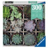 Ravensburger - Puzzle peisaje Plante suculente Puzzle Copii, piese 300