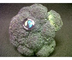 ECO BROCCOLI 1 KG