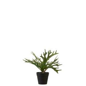 Edgar Ghiveci cu Planta, Plastic, Verde