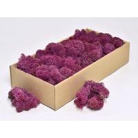 Licheni decorativi violet