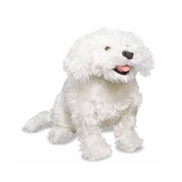 Catel Bichon Frise din plus