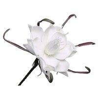 Floare din spuma alba