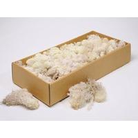 Licheni decorativi  albi