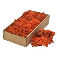 Licheni decorativi Cladonia Orange