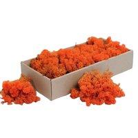 Licheni decorativi portocalii