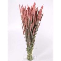 Spice grau roz vopsite