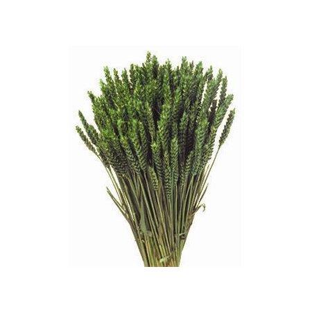 Spice grau verde deschis
